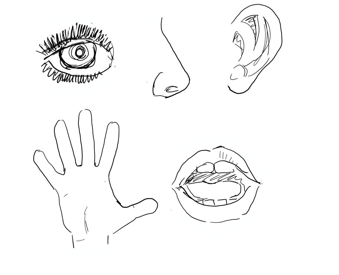 Kommunikation 5-Sinne